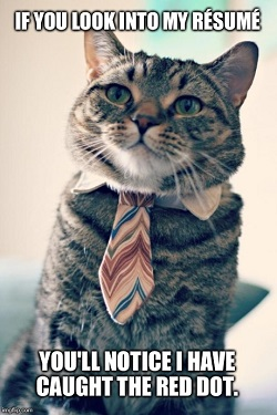 internship-cat-application-250
